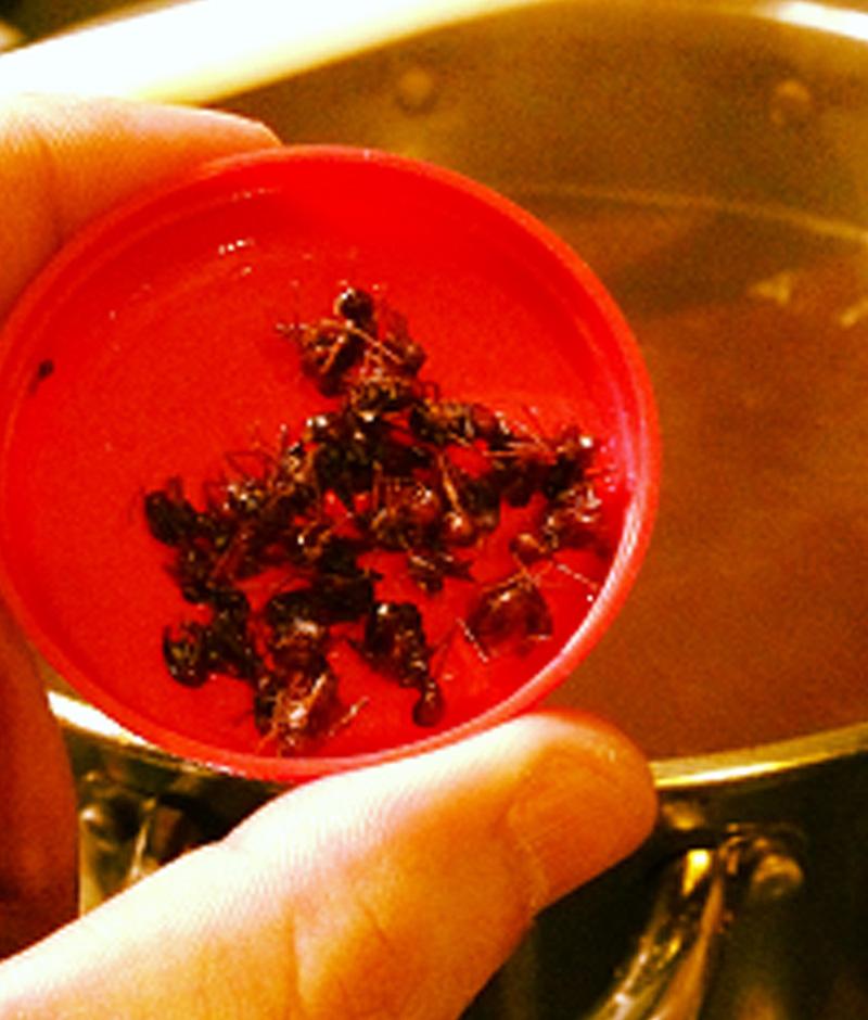 Brasileiros criam Cerveja com Figos, Tucupi Negro e Formigas Saúva