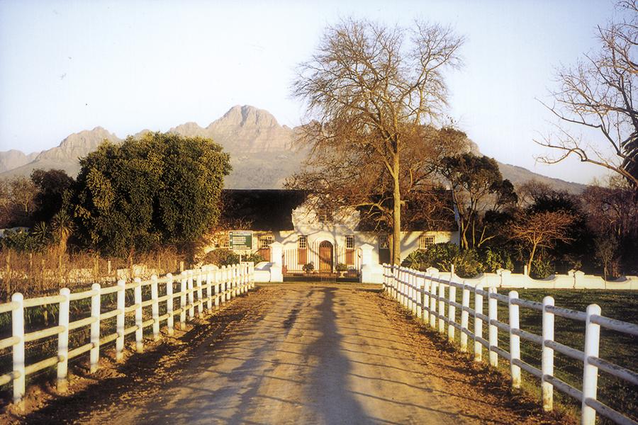 celeiro-vinhos-africa-do-sul-senhora-mesa