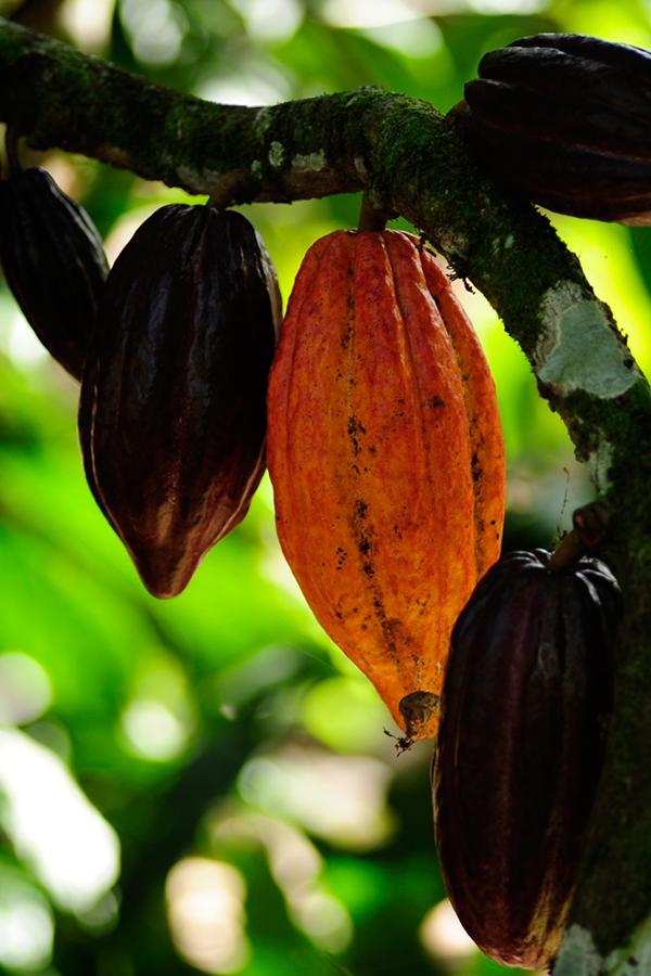 AMMA Chocolates marca presença no mercado internacional