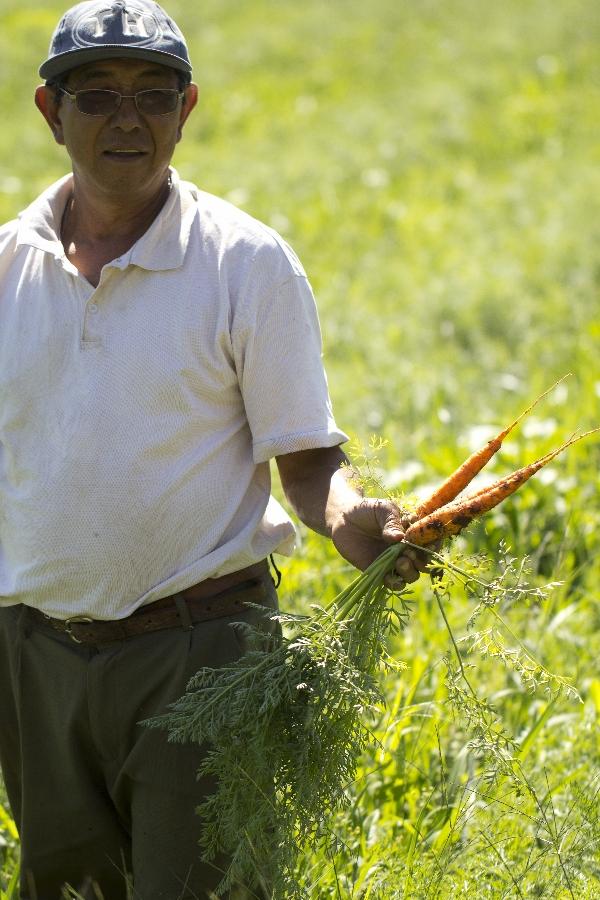 O produtor Nelson Nakazsítio cultiva no sítio Ponte Funda, em Paulínia, com orgânicos certificados.