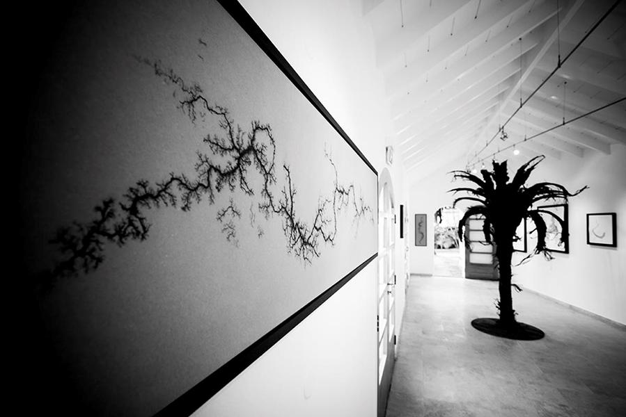 eden-rock-douglas-white-exhibition-senhora-mesa