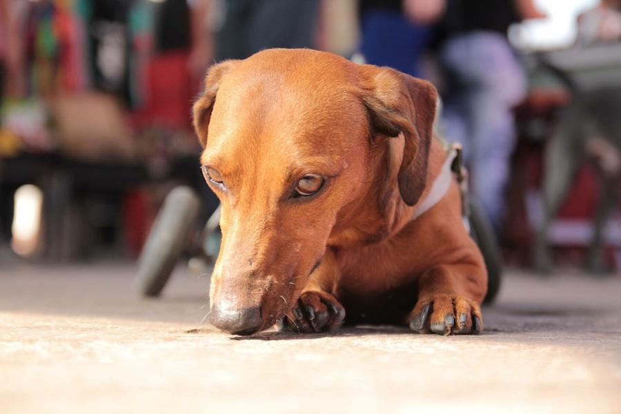 Osmar Santos Expõe suas Obras na Piola em prol da Campanha Adote um Pet com Deficiência